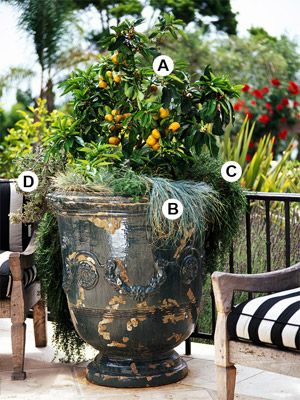 Create Bold, Dramatic Container Gardens