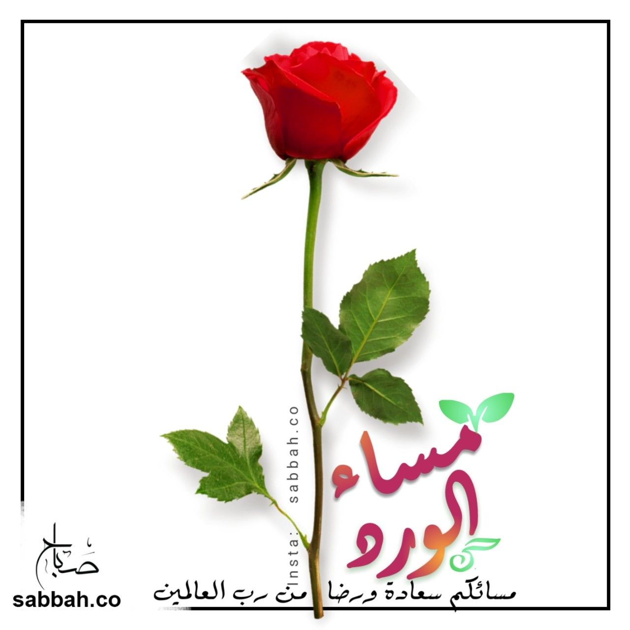 مسائكم سعادة ورضا من رب العالمين مساء الورد Insta Sabbah Co Www Sabbah Co Plants