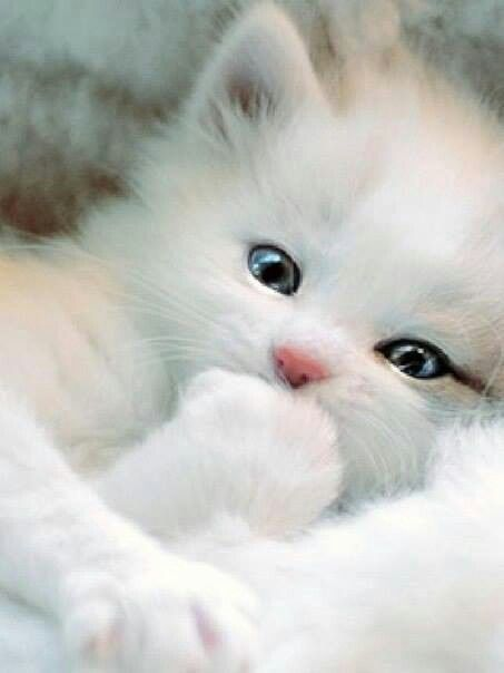 33e6b3ce96 Adorable black and white baby kitten - looks like a human baby - or perhaps  an…
