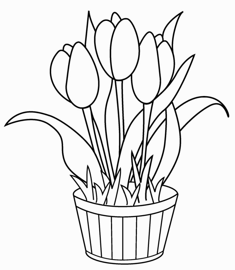 Tulips Coloring Pages Flower Coloring Pages Printable Flower Coloring Pages Birthday Coloring Pages