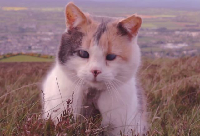 stevie the blind cat climbs a mountain | All Things CATS