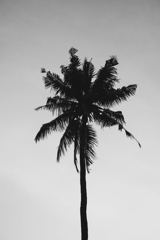 Coconut Tree Under Gray Sky · Free Stock Photo