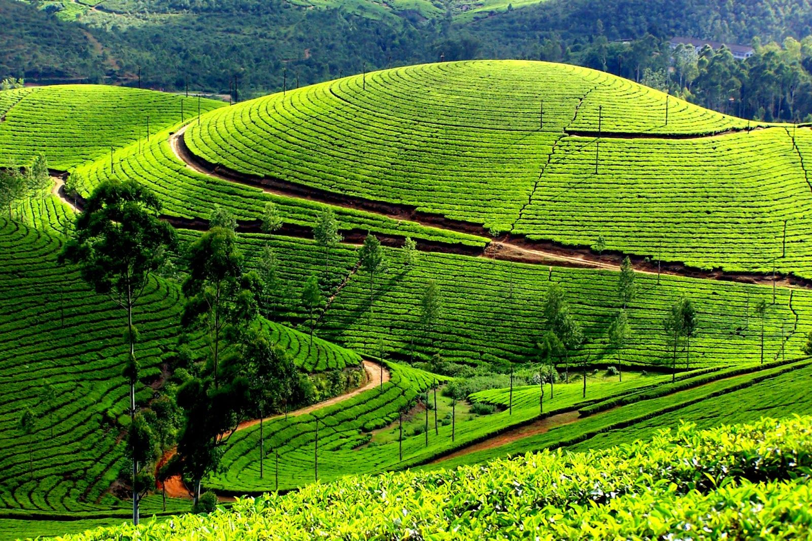 Laid back monsoon The Western Ghats Tourist places