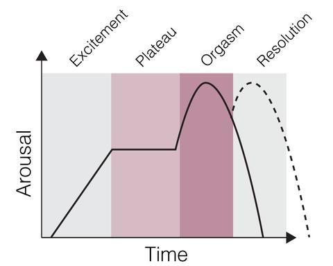 Female orgasm cycle