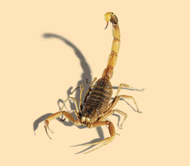 One Doctor S Quest To Save People By Injecting Them With Scorpion Venom Scorpion Venom Animal Planet