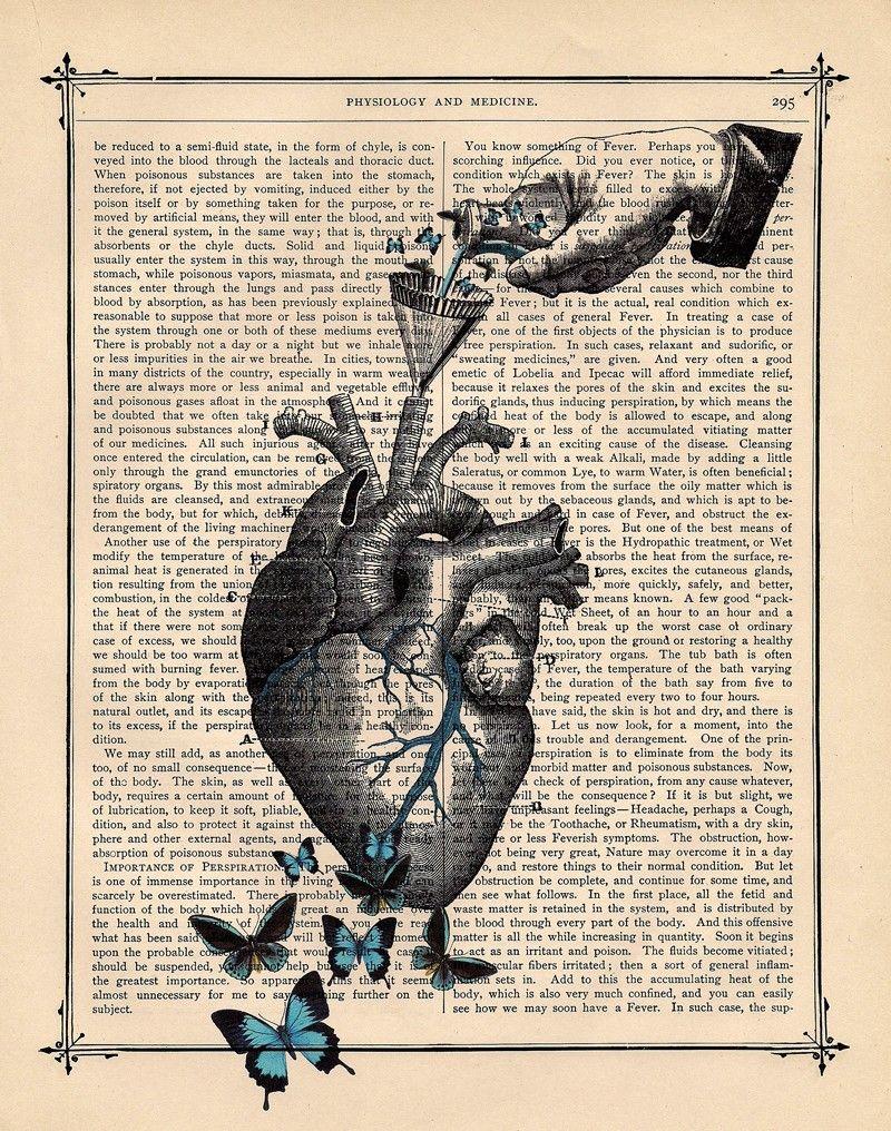 butterflies in my chest. #heart #anatomy | inspiration | Pinterest ...
