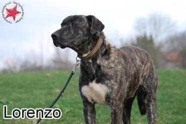 Lorenzo Mischling 1 Jahr Vertraglich Mit Hunden Kindern