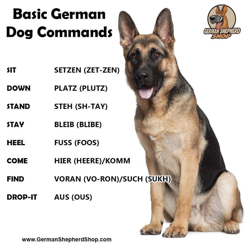 Germanshepherds Germanshepherdmemes Germanshepherdphotos