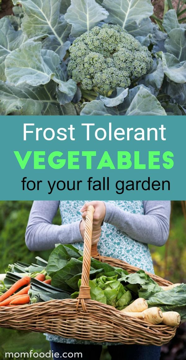 13 Frost Tolerant Vegetables Fall Vegetables To Plant 400 x 300