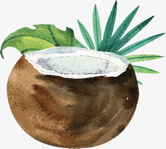Watercolor Hand Painted Fresh Coconut Milk Painting Watercolor