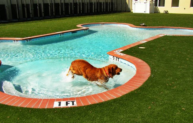This Is The Home Your Dog Would Design If You D Only Let Them Dog Pool Dog Swimming Pools Dog Swimming