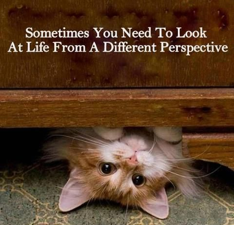 Kittens Funny Cats Animals Pets Animal Quotes Cute Quotes Cute Animals
