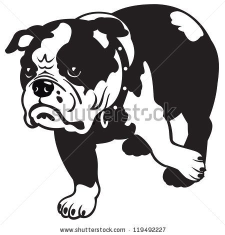 Dog English Bulldog Breed Black And White Vector Picture Isolated