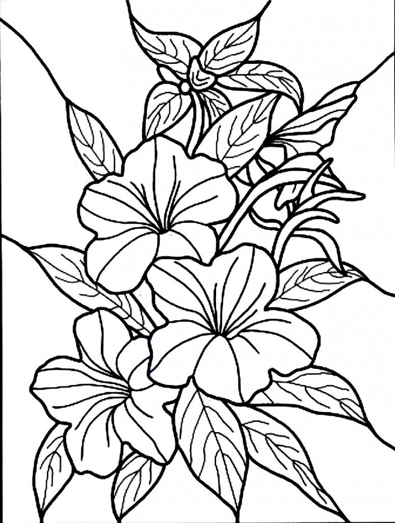 Free Printable Hibiscus Coloring Pages For Kids Flower Coloring Pages Printable Flower Coloring Pages Flower Printable