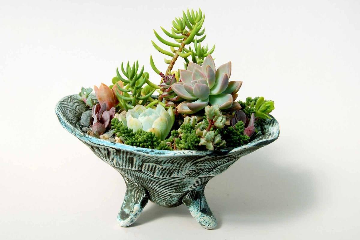 succulent dish garden Google Search Planting