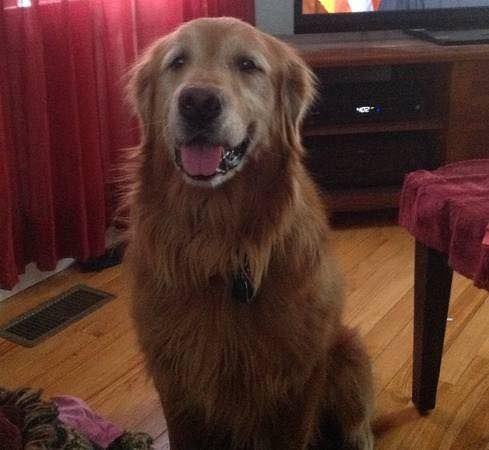 Kacey Swan Lost And Found Golden Retrievers April 21 Edited