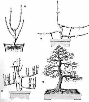 ФОРМЫ ДЕРЕВЬЕВ – ФОРМЫ БОНСАИ #bonsaiplants