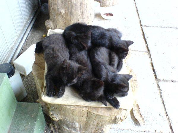 cats+by+Biljana1313.deviantart.com+on+@DeviantArt