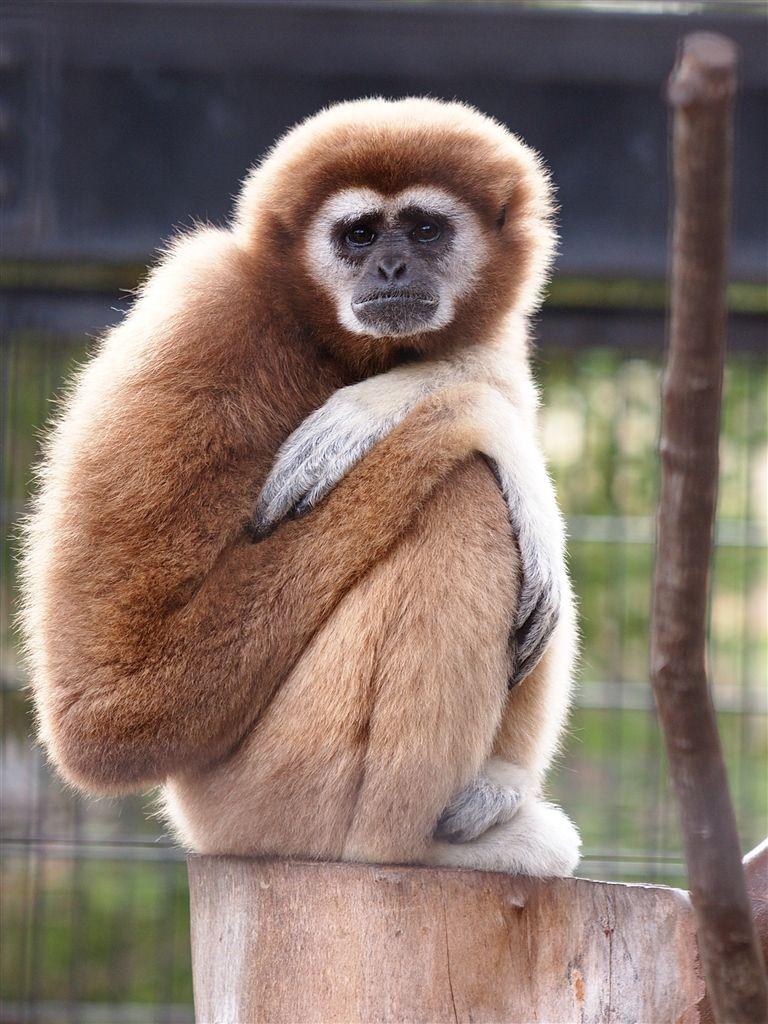 価格 Com オリンパス ズイコーデジタル Ed 150mm F2 0クチコミ掲示板の投稿画像 写真2 4 1279626 動物のおもしろ動画 可愛すぎる動物 野生動物