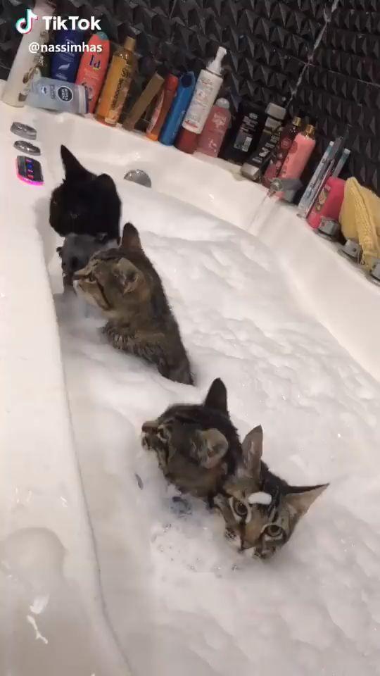 Cat Bath #cats - #advertising #Bath #Cat #cats