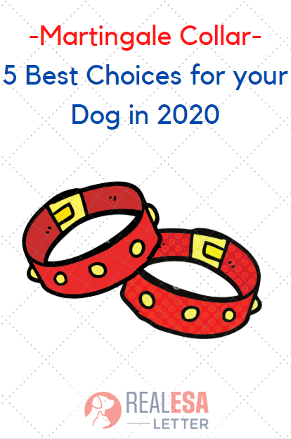 A martingale collar is different and using it is also easy