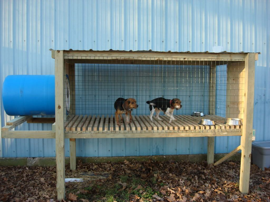 home ideas for beagles google search house ideas for