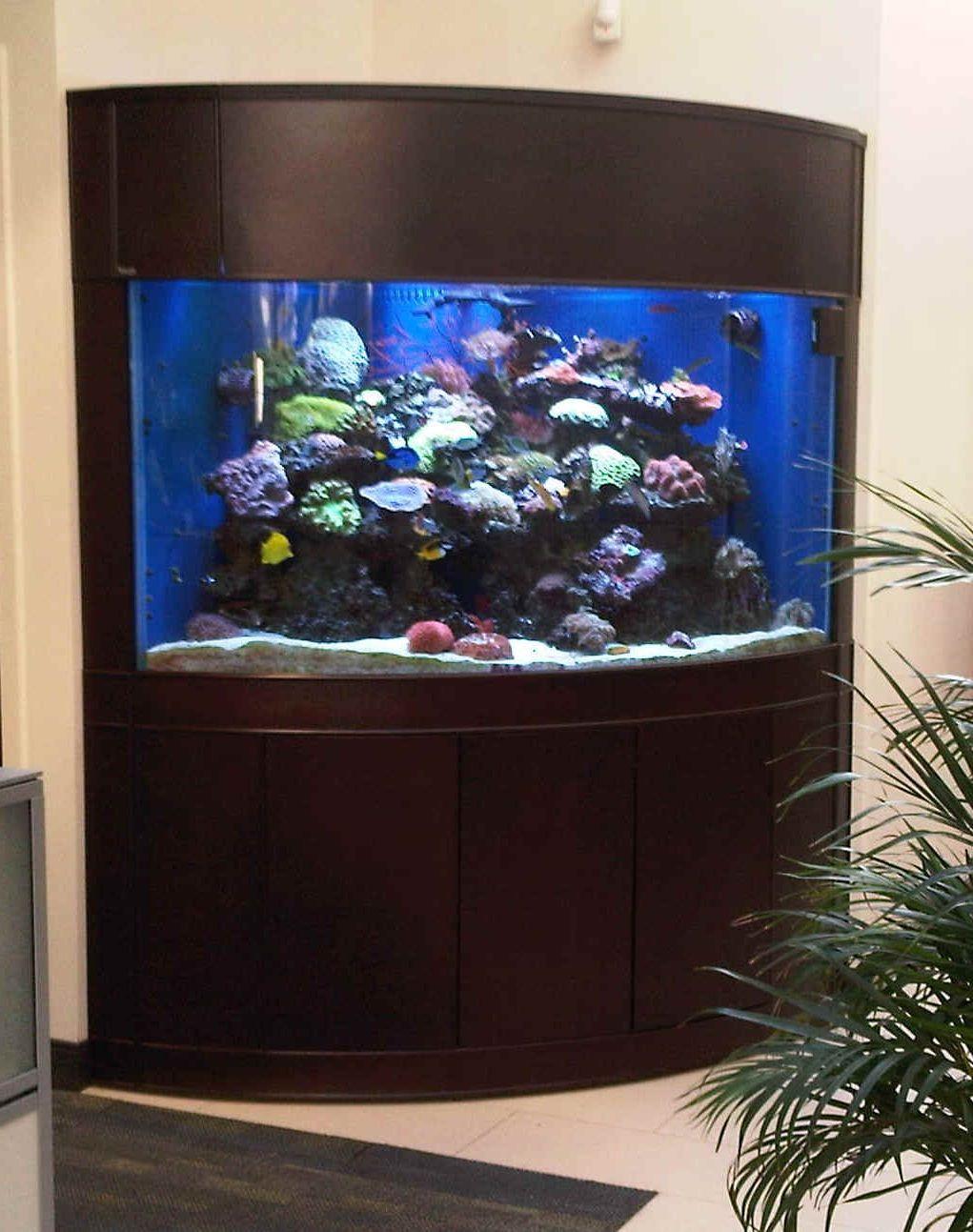 Captivating Corner Fish Tank Aquarium Fish Tank Corner Aquarium