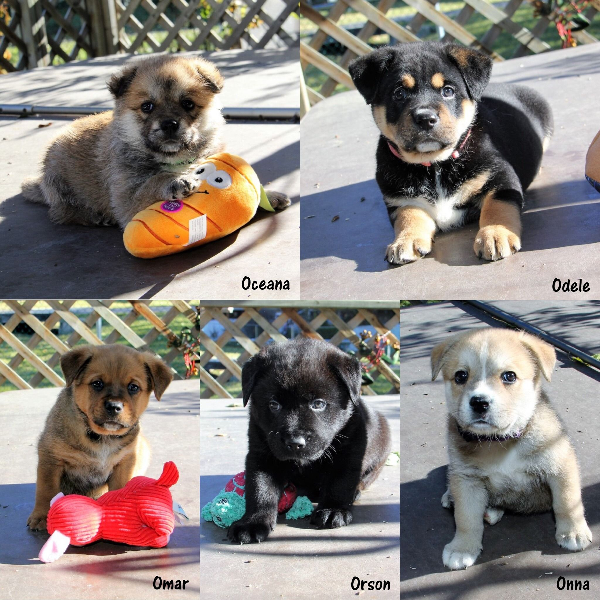 This is the O litter, they are now available for adoption
