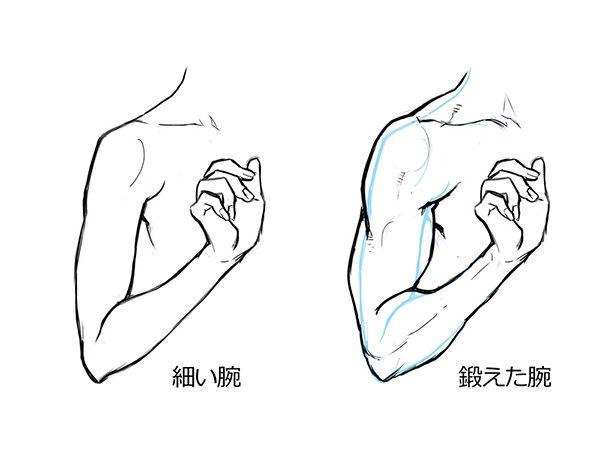 男女の体格差から学ぼう筋肉質な女性の描き方 Drawing People 腕