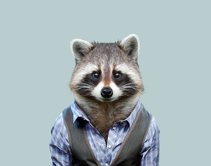 This Artist Spent 3 Years Dressing Zoo Animals Like Humans And