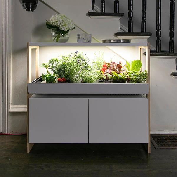 Indoor Garden In 2020 Indoor Farming Indoor Garden Hydroponic Gardening