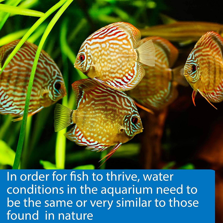 7750c8b06170531946d7301383e49486 - How To Get Ammonia Out Of My Fish Tank