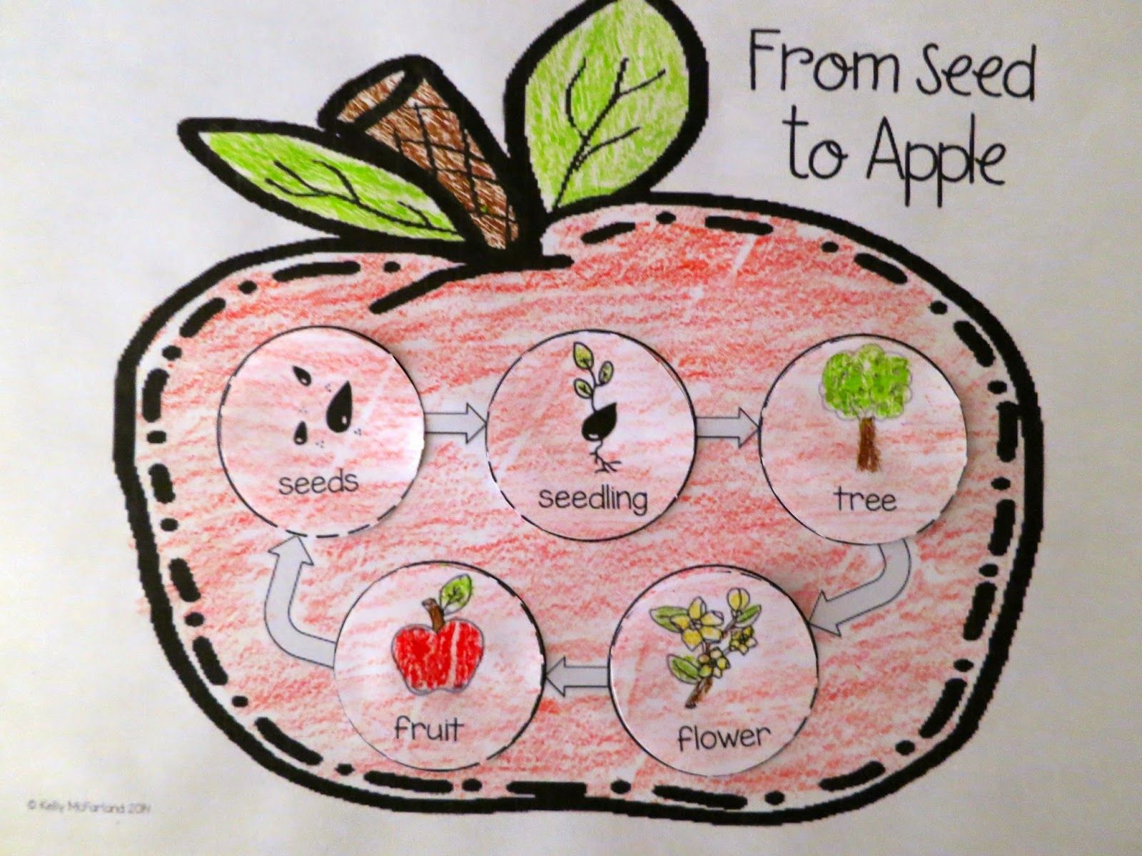 Apple Themed Activities