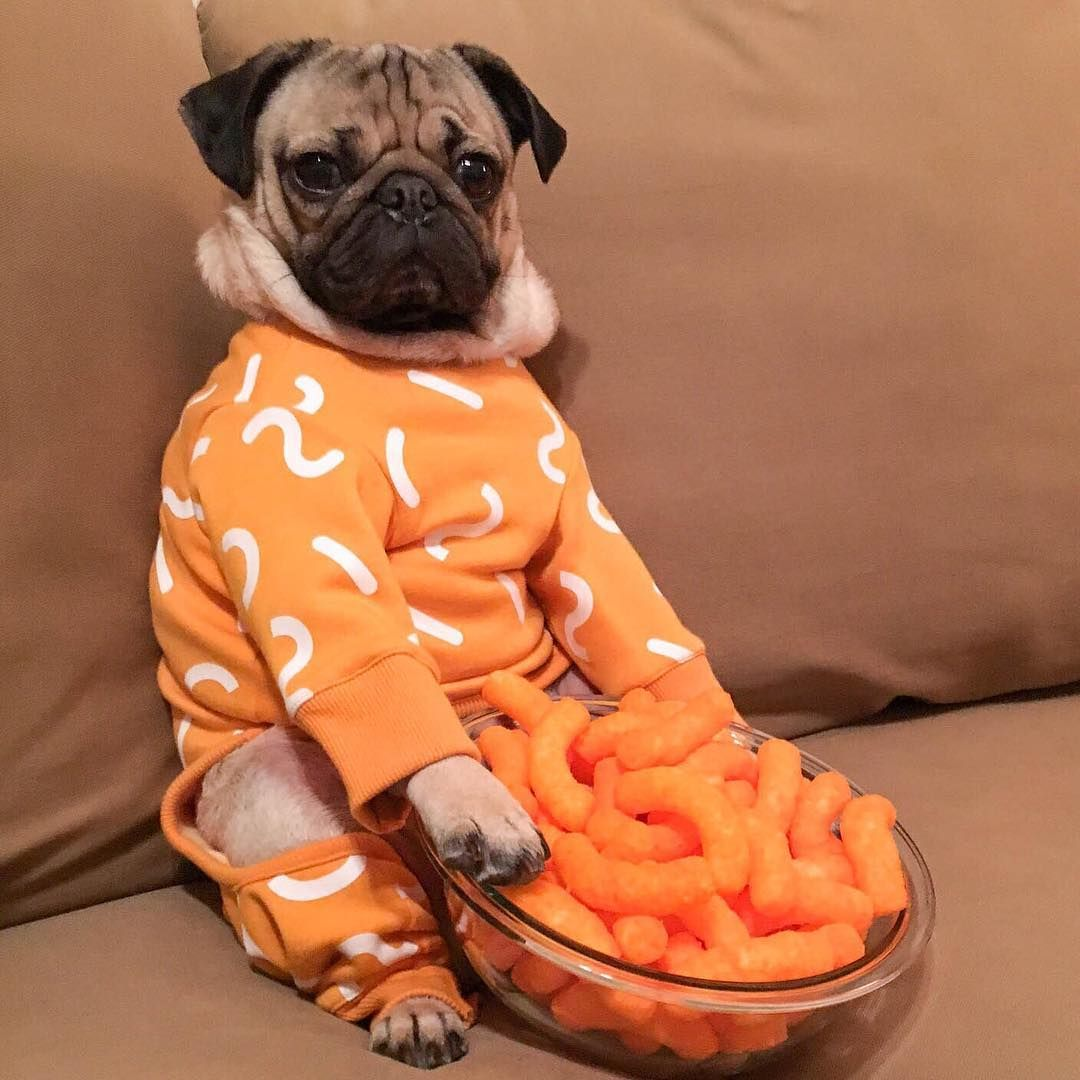Doug The Pug On Instagram To Eat A Cheese Puff U Must Become A