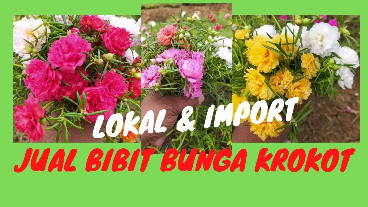 Pin By Cibodas Farm On Cibodas Farm In 2021 Bunga Farm Herbs