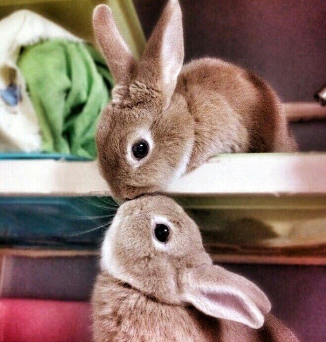 Pin Von Anna Moon Auf Animals Susse Tiere Ausgestopftes Tier