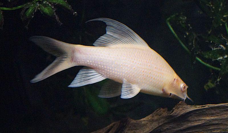 A Few Shots Of The Freshwater Stuff Ocean Fishing Fish Tank Ocean Life