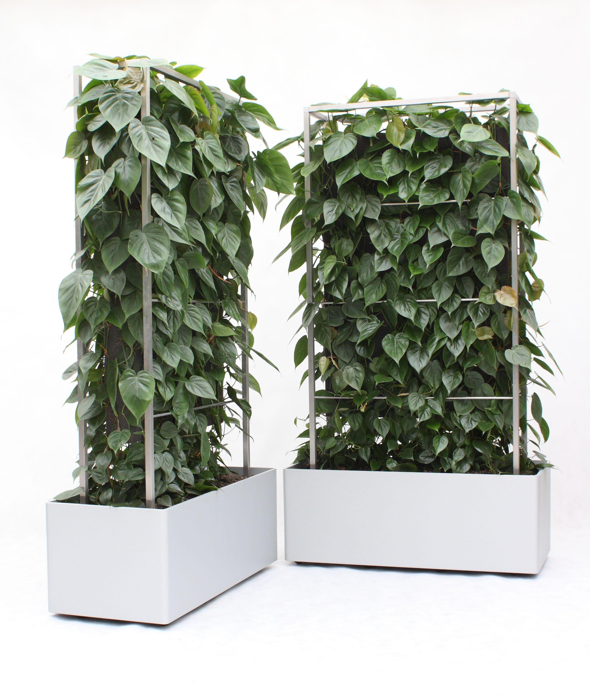 Bürobegrünung, Schallschutz, Sichtschutz, Büropflanzen ...