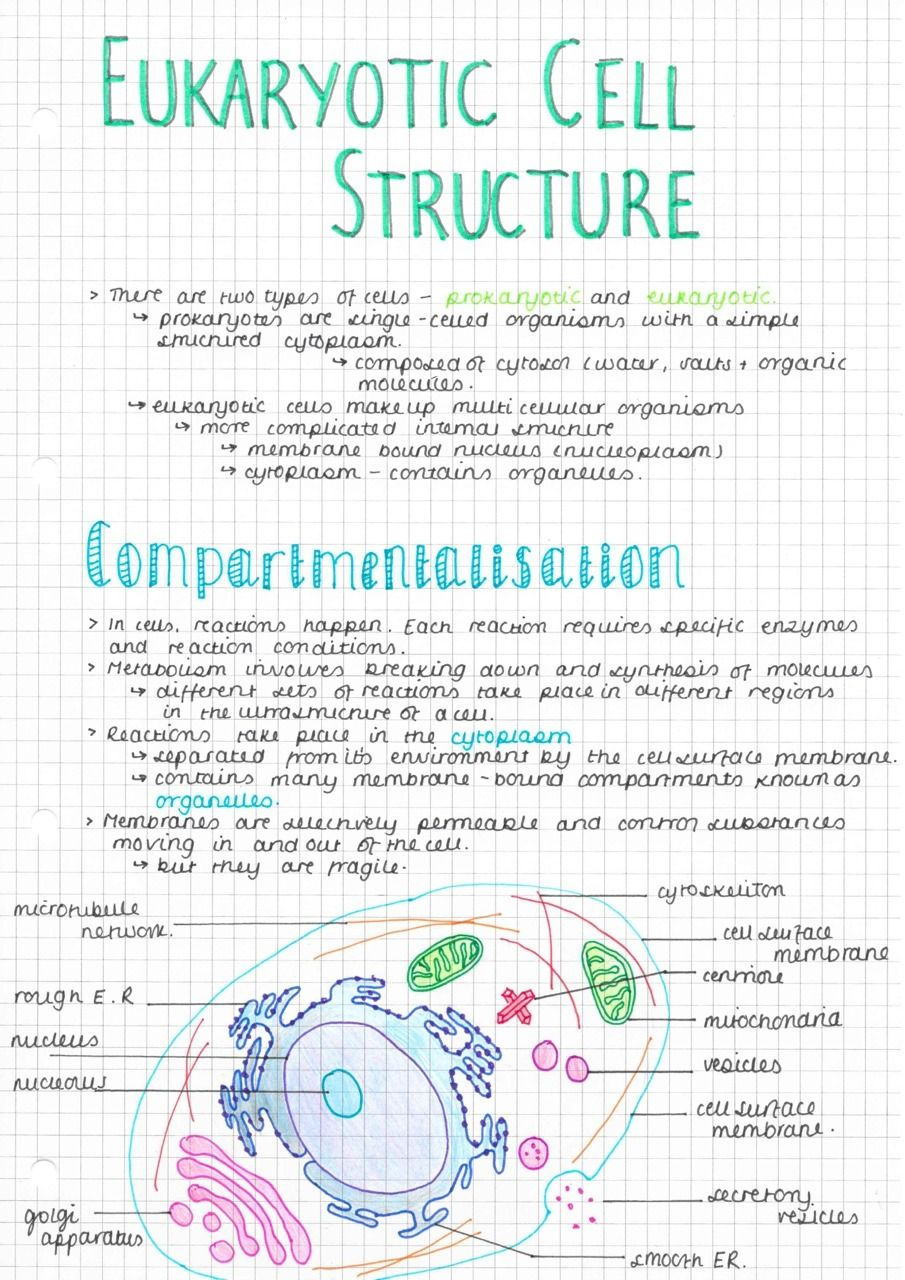 Here Are Some As Biology Notes I Made Yesterday On Eukaryotic Cell Structure I Finished Off The Diagrams Today And Science Notes Biology Notes Biology College