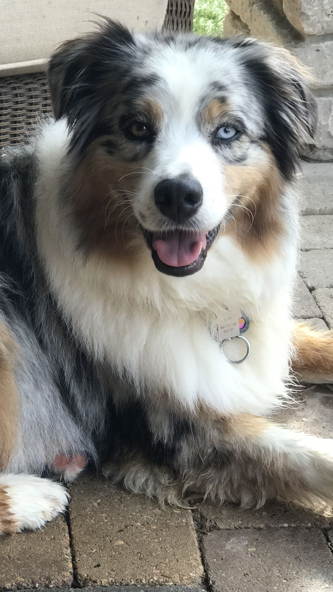Gorgeous Aussie With A Beautiful Blue Eyes Australian