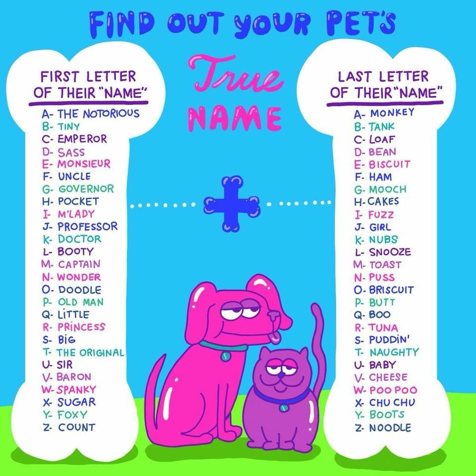 Pin By Shari On Dog Lovers Pet Rabbit Care Therapy Dog Training Therapy Dogs