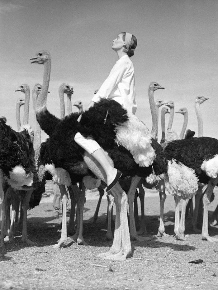 Wenda and ostriches, 1951 Norman Parkinson #Photography #harpersbazzar