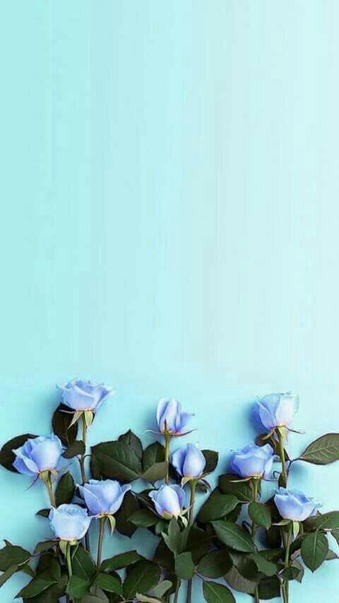 Blue Wallpaper Iphone Blue Flower Wallpaper Flower Background Wallpaper Blue Flowers Background