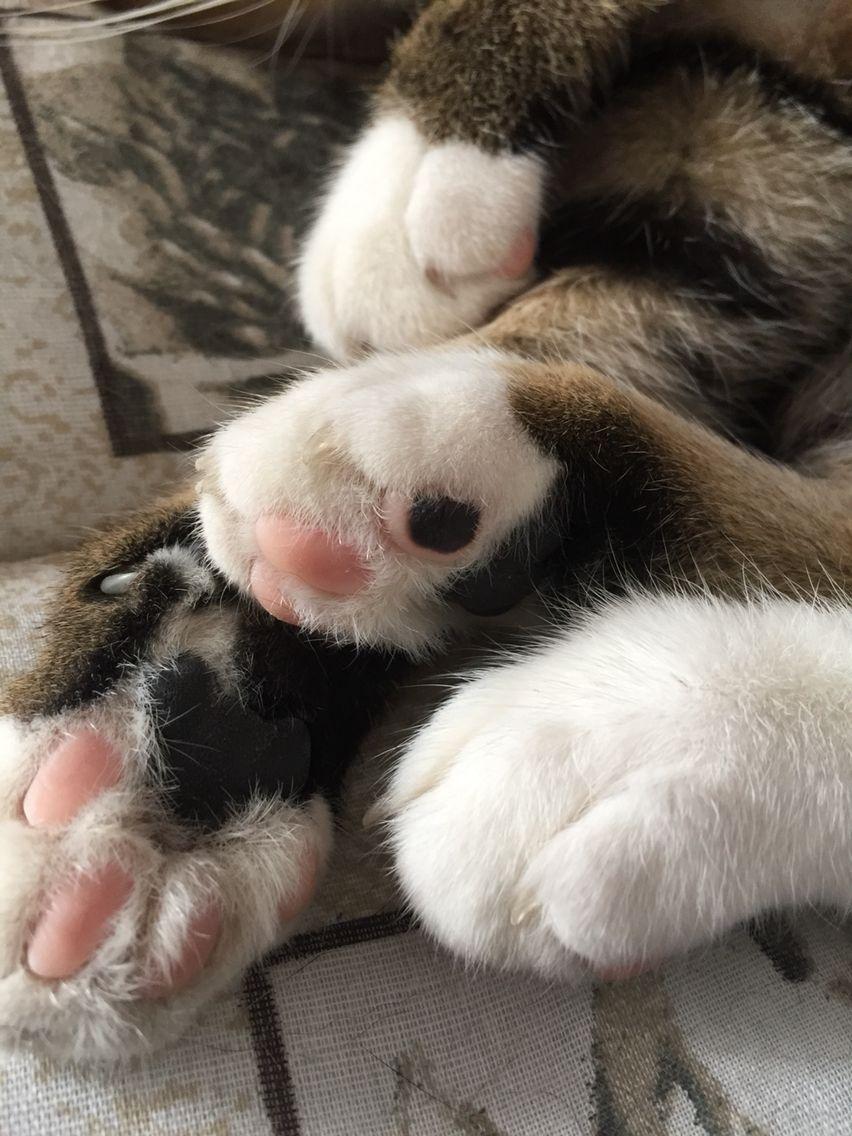 Mama Loves These Jelly Beans Bonsaikitten Sirtobias Jellybeans Bonsai Kitten Feline Jelly Beans