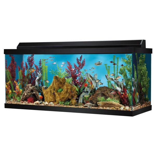 Null 75 Gallon Aquarium Aquarium Stand 75 Gallon Aquarium Stand