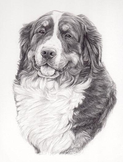 potloodtekening berner sennen hond lissy hondenportret in