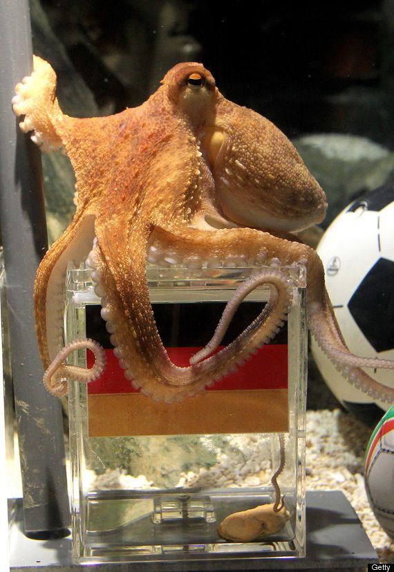 Brilliant Octopus Stuns Soccer Fans With World Cup Picks Paul The Octopus Octopus World Cup