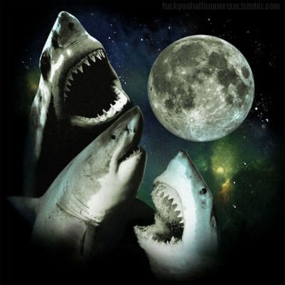Sharks Howling At The Moon No Big Deal Animals Pinterest