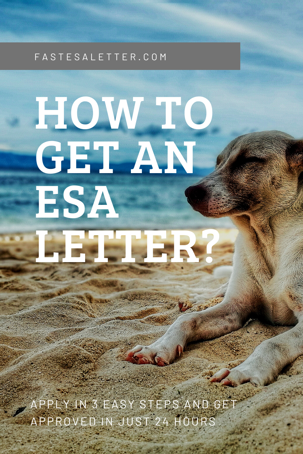 How to get your ESA Letter in 24 hours? in 2020
