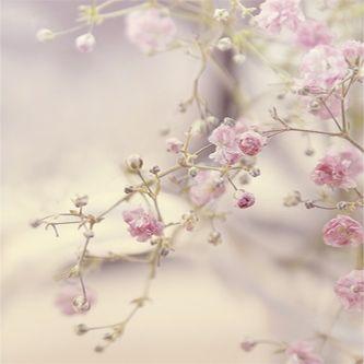 صور بلاك بيرى رقيقه 2017 خلفيات بى بى راقيه 2017 Small Pink Flowers Beautiful Flowers Flower Backgrounds